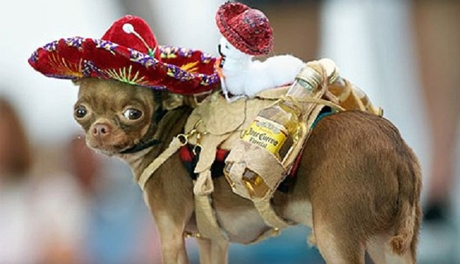 Cinco de Mayo fiesta or fiasco with dog - One Hand Off